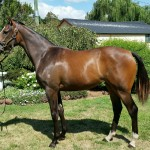 Yearling Sale Wrap Up & Lots Available for Sale
